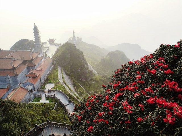 Du lịch Sapa ngắm hoa đỗ quyên trên Fansipan