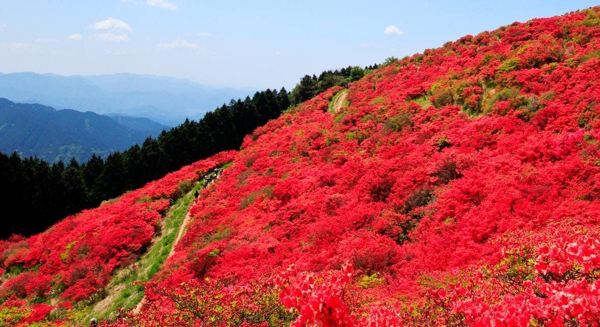 Đỗ Quyên mùa xuân Nhật Bản