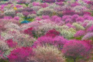 10 Lý do bạn nên đến du lịch Nhật Bản trọn gói vào tháng 3