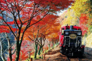Nên đi du lịch Nhật Bản vào mùa nào là thích hợp nhất?