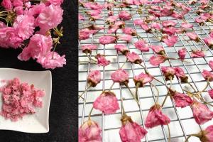 Những lý do bạn nên đi du lịch Nhật Bản vào mùa hoa anh đào?