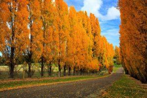 Du lịch Nga vào mùa thu có gì đặc biệt?