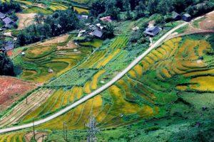 Chiêm ngưỡng những cung đường vàng để ngắm Sapa mùa lúa chín