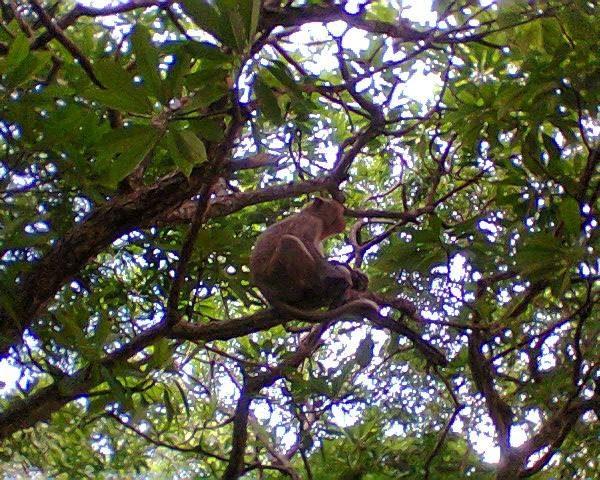 Du lịch Cát Bà thăm quan đảo khỉ tự do sinh sống