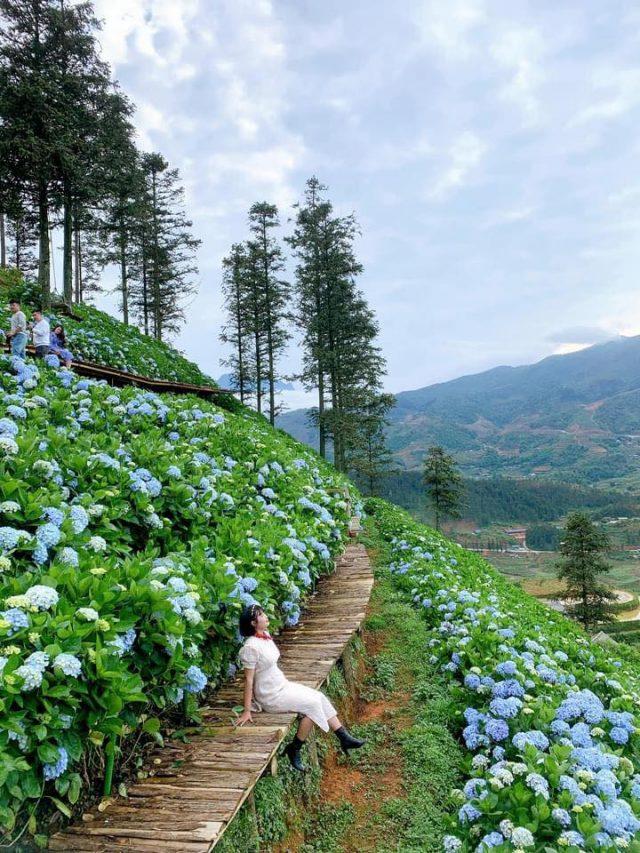 Du lịch Sapa check in sang chảnh ở vườn hoa cẩm tú cầu