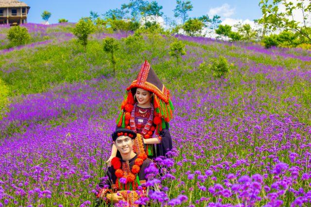 Du lịch Sapa thả hồn giữa rừng hoa oải hương thơm ngát