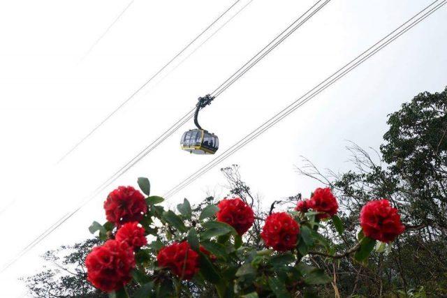 Chinh phục Fansipan bằng cáp treo hay checkking bạn đều ngắm được hoa đỗ quyên bung rực rỡ