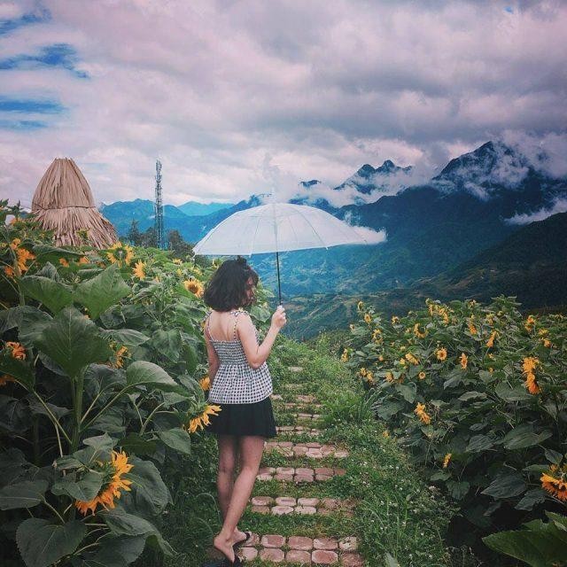 Du lịch Sapa không thể bỏ qua vườn hoa hương dưỡng lung linh, say mê lòng người